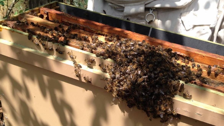 Comment récolte-on le miel ?
