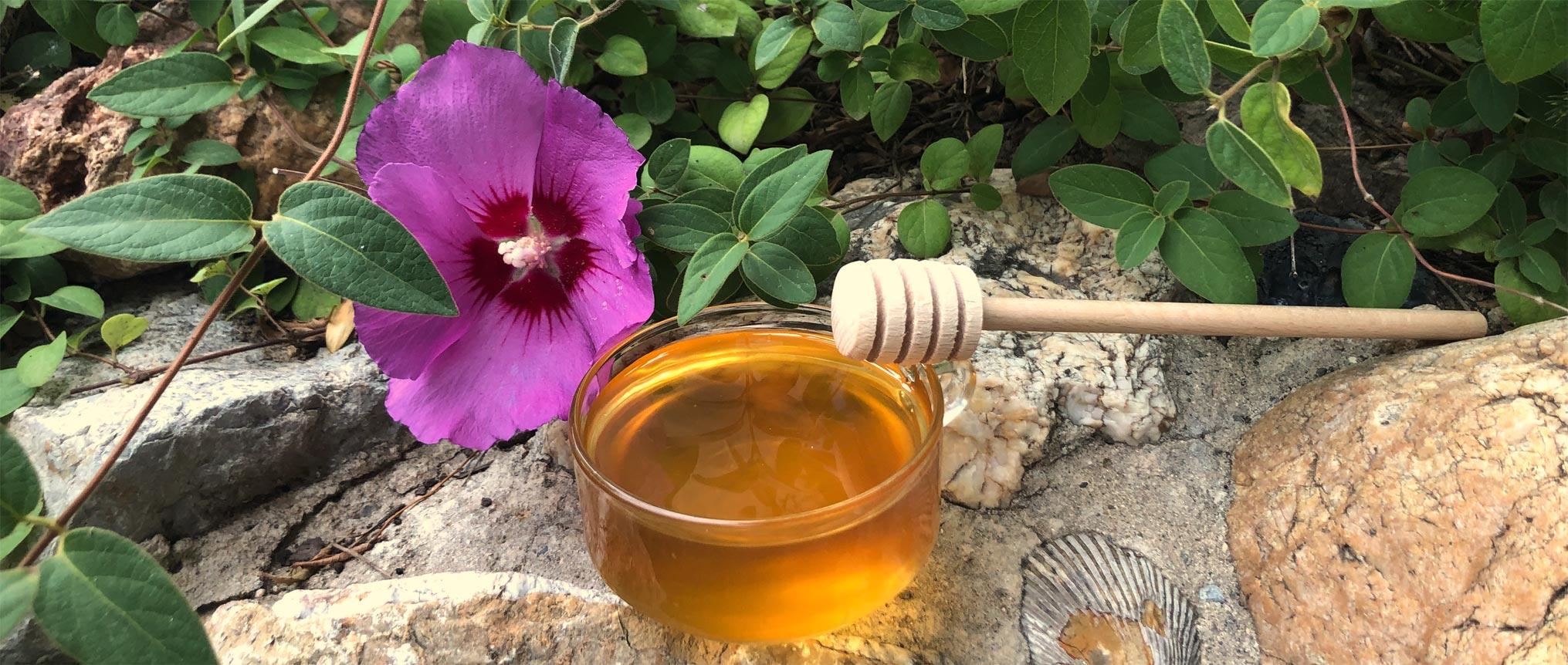 Miellerie saveurs de miel pot cuillère en bois à Perpignan 66