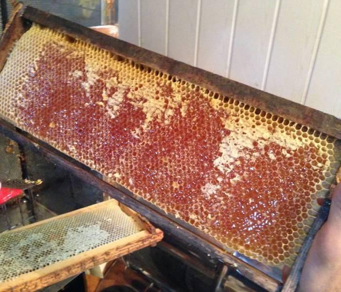 Cadre-mielPO