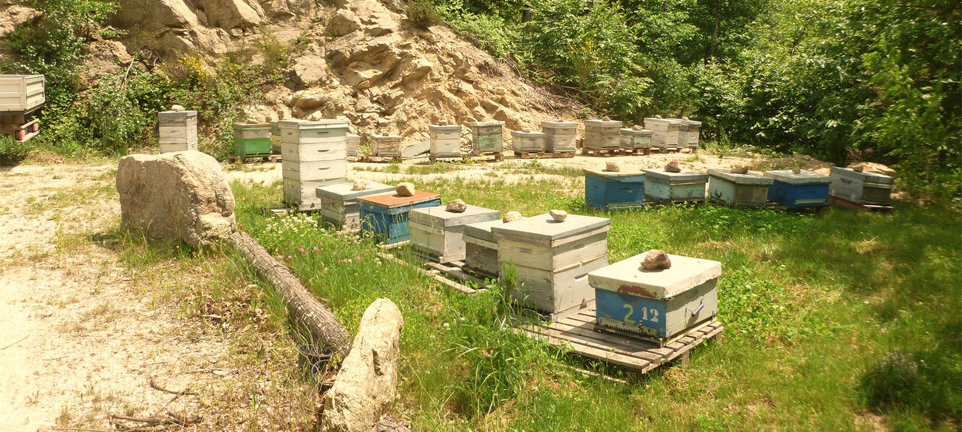 Apiculture ruches dans les Pyrénées Orientales 66
